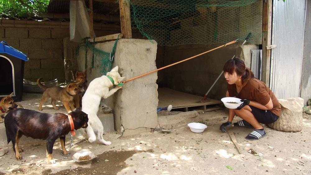 세상에 나쁜 개는 없다 1부 - 들개, 반려견 되다