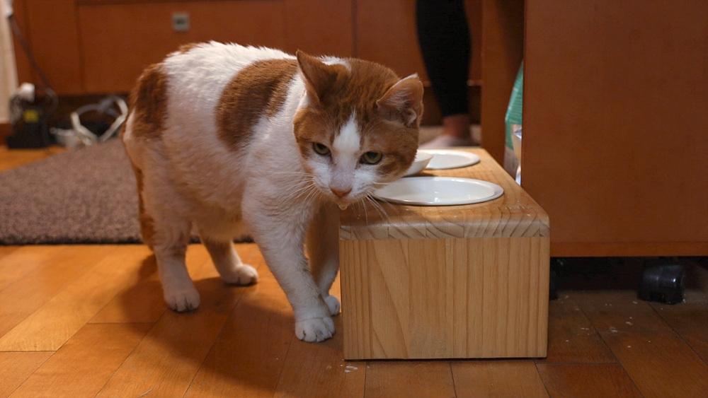 고양이를 부탁해 1부 - 노묘를 대하는 우리의 자세