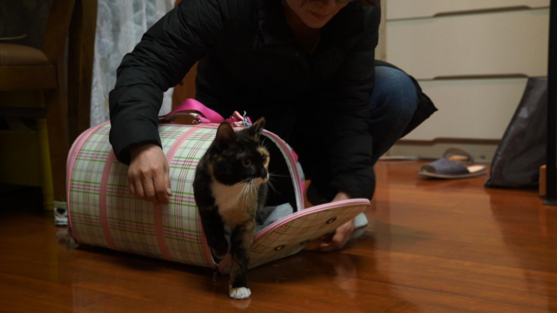 고양이를 부탁해 - 겁 없는 고양이와 겁 많은 개 합사 일기