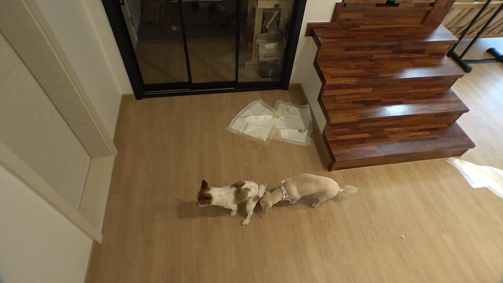 세상에 나쁜 개는 없다 - 똥 먹는 개가 사람 잡네