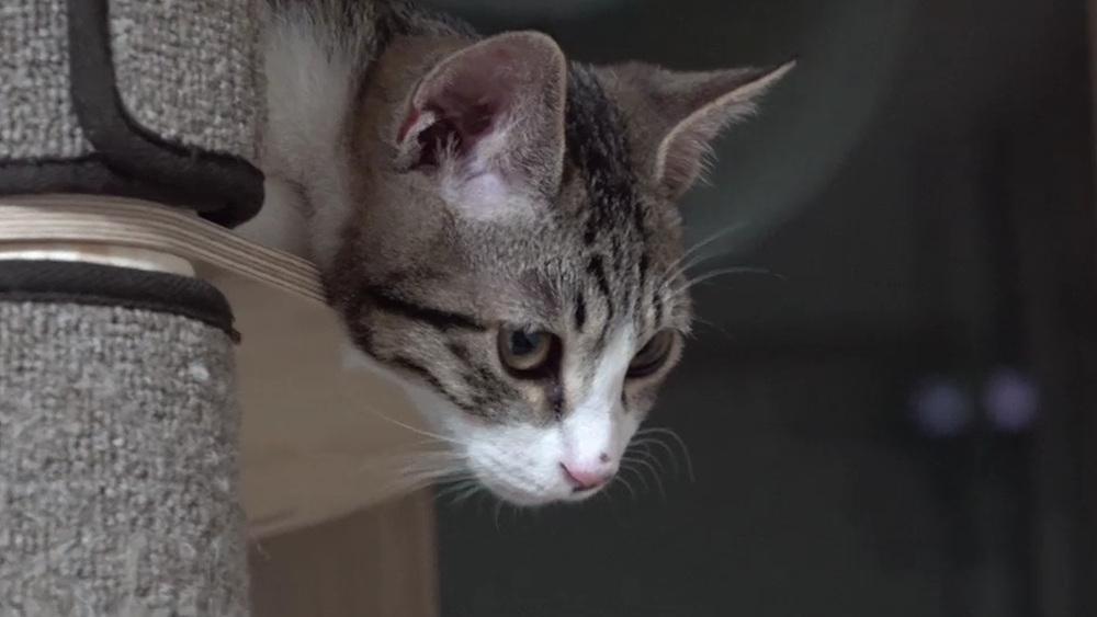 고양이를 부탁해 - 중년묘와 초딩묘의 아찔한 동거